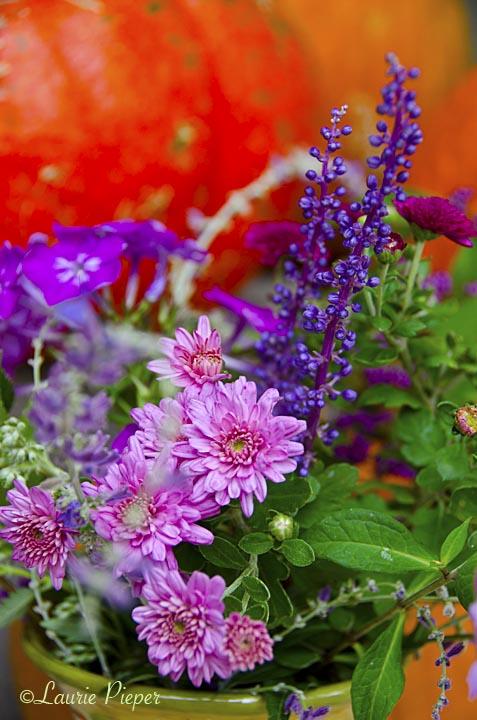 Chrysanthemums&AutumnFlowers