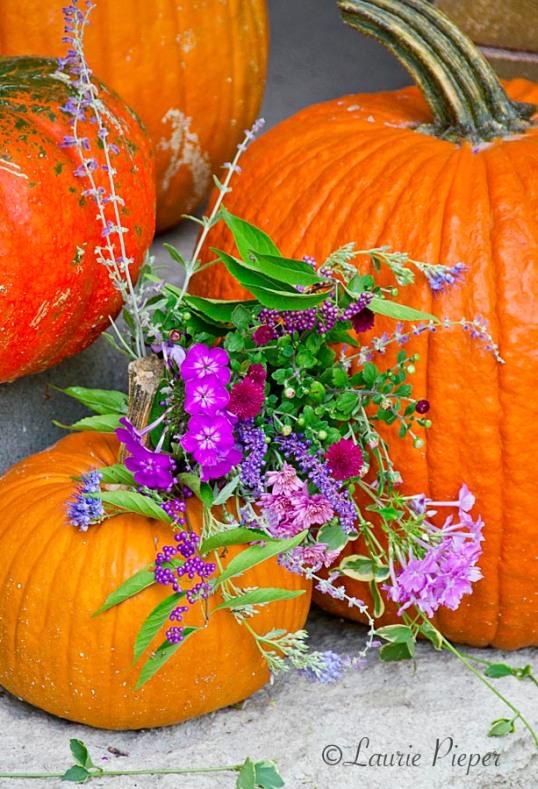 Pumpkins&Flowers