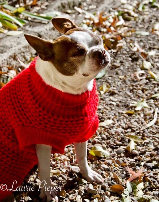WillowInSunRedSweater