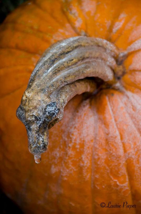 IceOnPumpkin