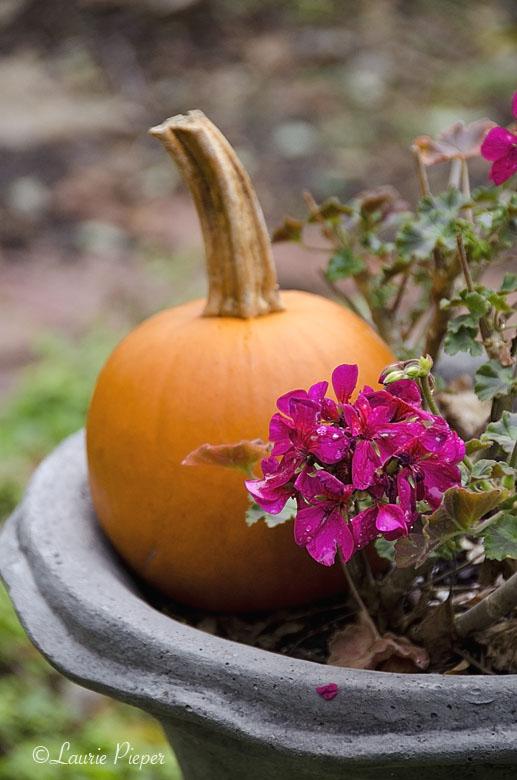 Pumpkin&Geranium