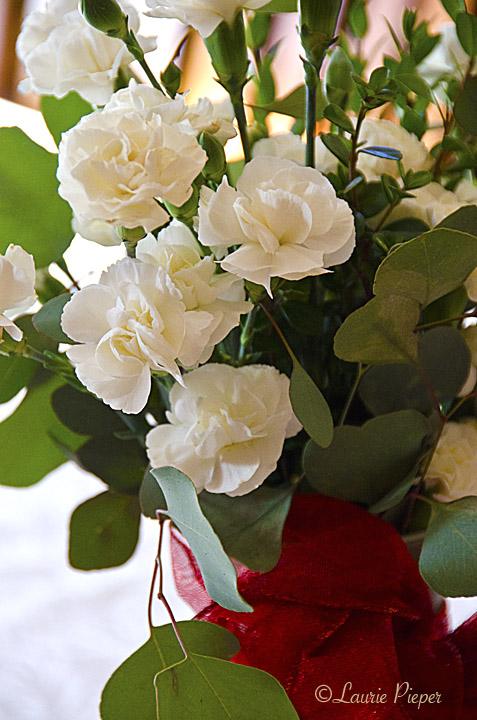 CarnationsWhite