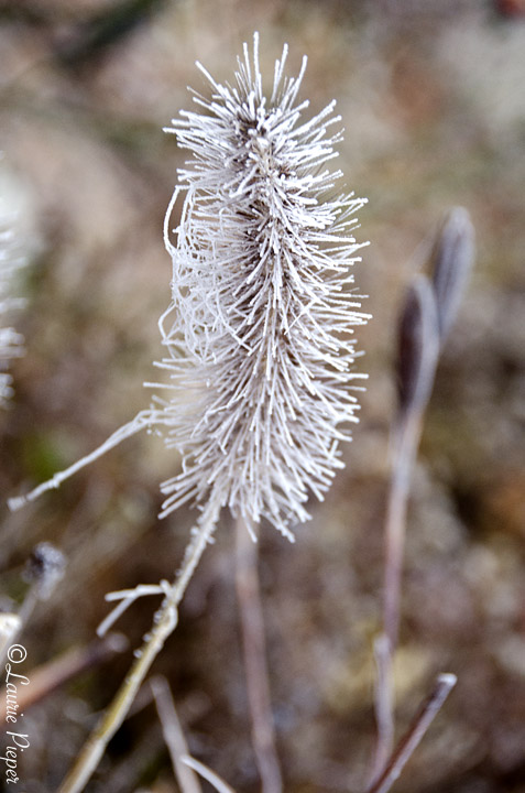 FrozenGrass2