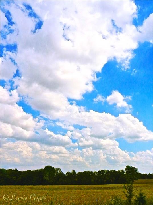 Sky&Field