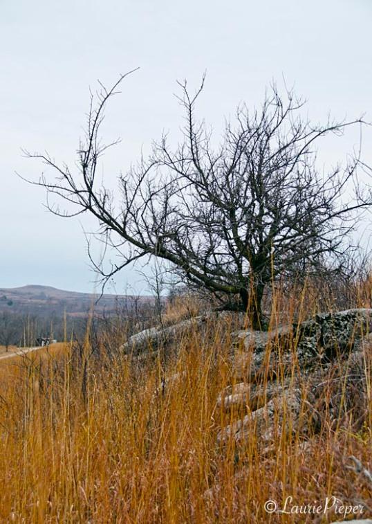 rhinotree