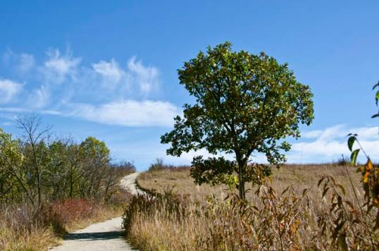 KonzaPaath&Tree